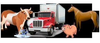 Перевозка живых грузов